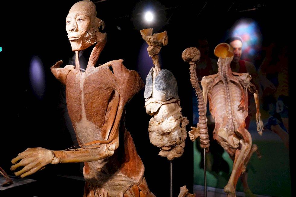 Cuerpos reales en exhibición Bodies