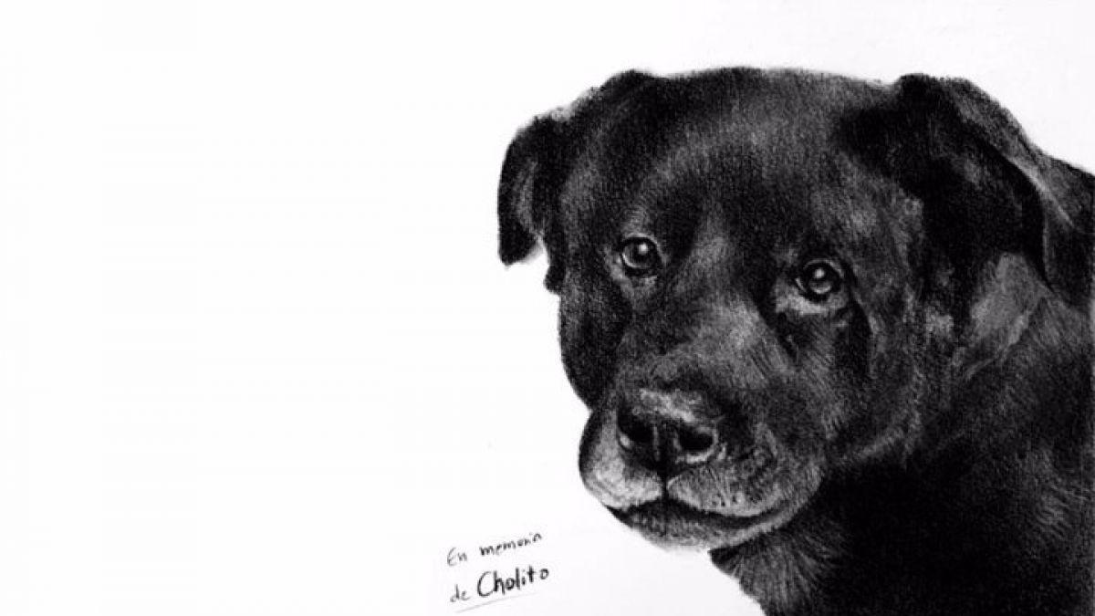 """Tenencia responsable de mascotas: ¿En qué consiste la """"Ley Cholito"""" que se promulgó este miércoles?"""