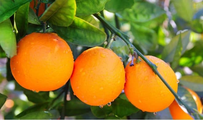 La importancia de consumir Vitamina C diariamente