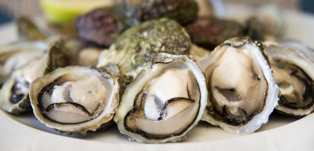 """""""Mar de Amores"""" se suma a los panoramas del 18 con cata de ostras y taller de biología marina"""